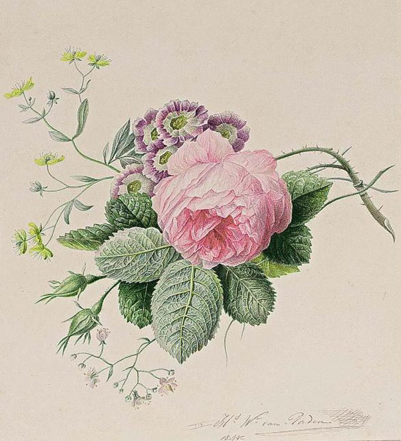 Johan Laurent Zjensen A white rose.