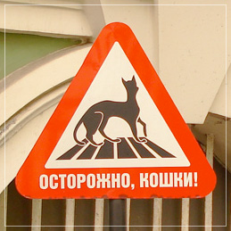 http://img1.liveinternet.ru/images/attach/c/0/40/390/40390362_1235909068_cats.jpg