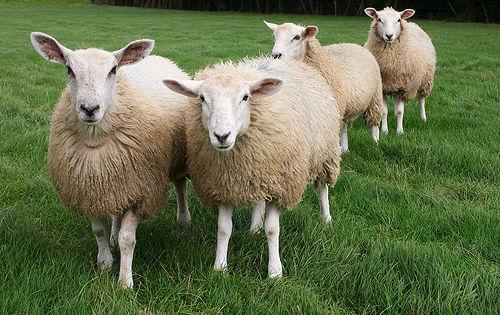 5. 4. 3. 2. 1. Основные требования к преобразователю для стрижки овецМашинка для стрижки овец пользуются заслуженной...