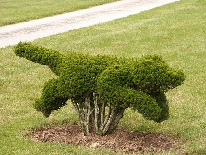 Как сделать из кустарника дерево 9