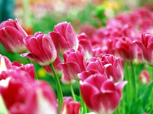 http://img1.liveinternet.ru/images/attach/c/0/40/681/40681082_Spring_02.jpg