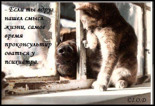 http://img1.liveinternet.ru/images/attach/c/0/40/824/40824151_1236699067_img_40085476_2494_1.jpg
