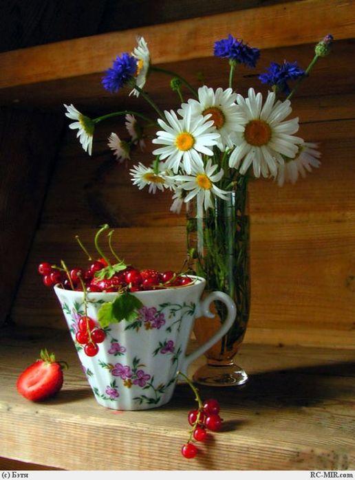 Утренние цветы фото
