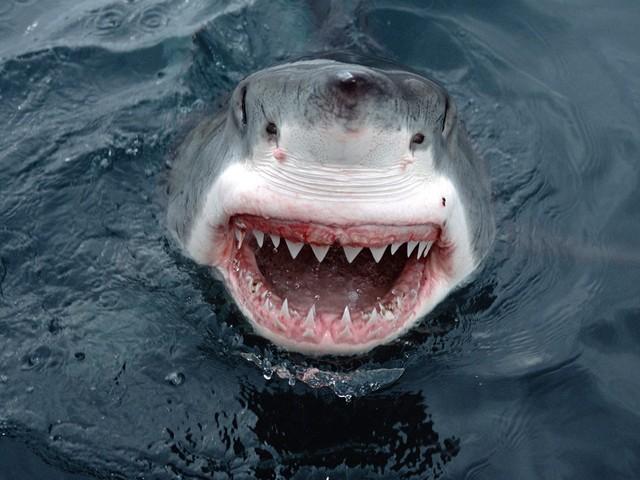 Акулы   фото, заблуждения и факты о нападении акул на человека