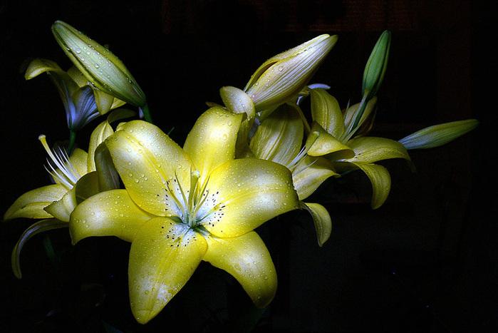 Легенды о лилии.