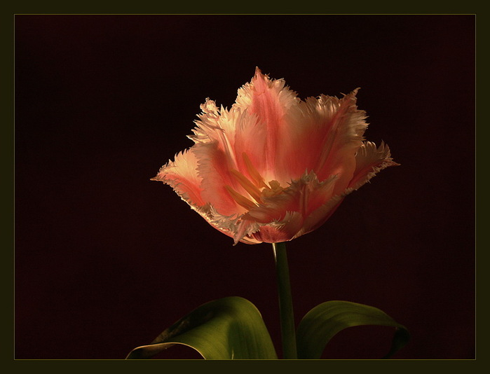Gül lale çiçek resimleri en güzel karışık çiçek resimleri