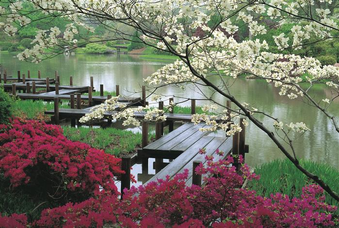 цветы, мостки, япония, вода, сад обои.
