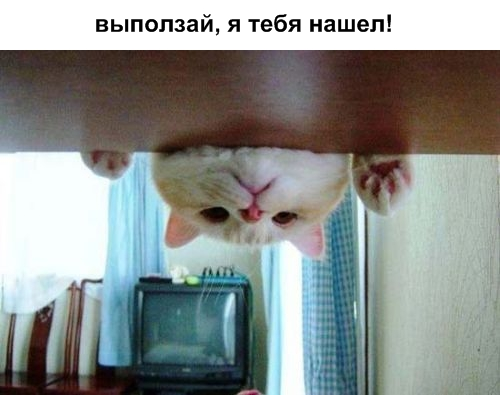 Кошки умнее людей!