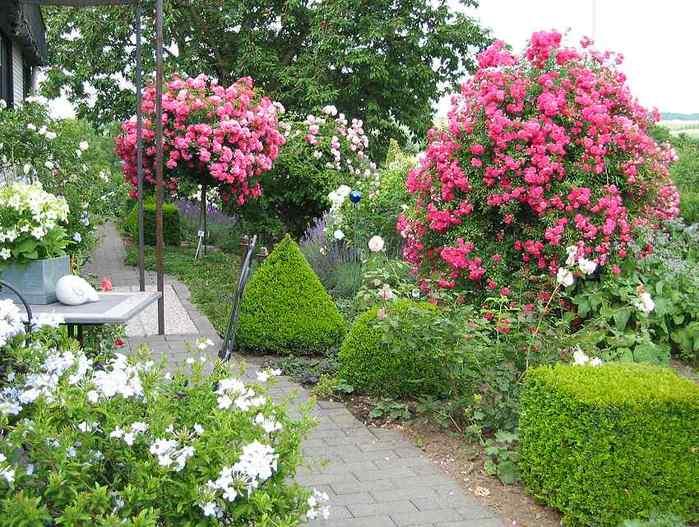 Сад роз фантастически красивый сад