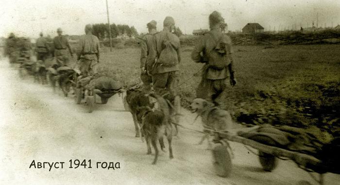 ...с поля боя около 700 тысяч тяжело раненых, подвезли к боевым частям.