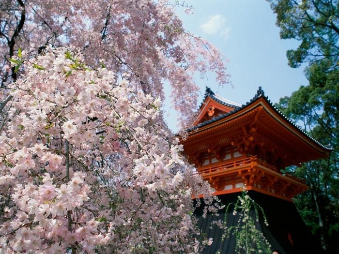 Куда унеслось ты. весна. поэзия.  Сердце моё.  Погоди! японская литература.  Горные вишни.