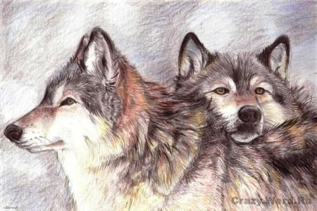 охота волка картина
