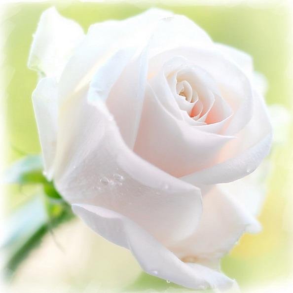 ...счастья в дом твой, любви и нежности, здоровья тебе и любимым твоим.