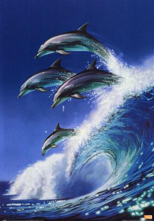 Фото животных.  Дельфин.  Самые умные животные на Земле.