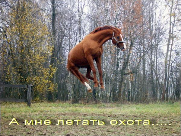 http://img1.liveinternet.ru/images/attach/c/0/46/237/46237658_69859_64407.jpg