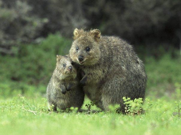 фото. позитив. животные.  Прикольные фотографии животных.  Ключевые теги. картинки. фотоподборка...
