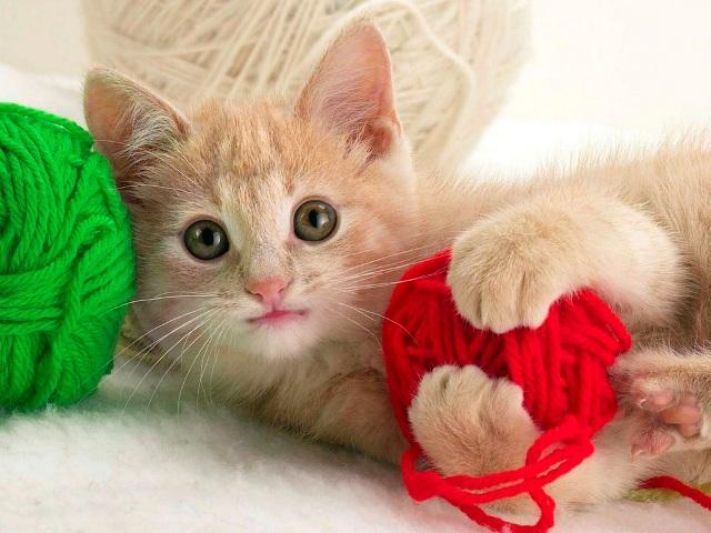 Купить котёнка не сложно, трудности начинаются.