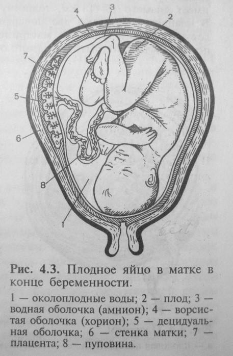b История болезни /b- Иммунология.