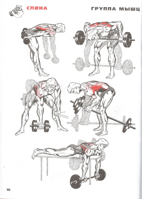 Изолирующее упражнение.  Понятие ПИК бицепса -это лишь рельефная мышца.