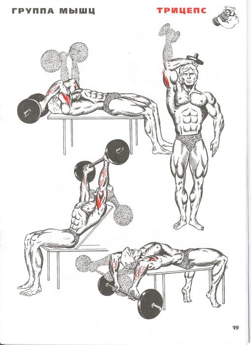 Упражнения чтобы накачать трицепс в домашних условиях - Benefist.ru