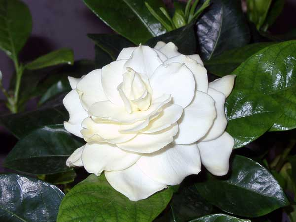Я всегда буду рядом с тобой: Роза Аль-Намри трогательно поздравила мужа с Днем рождения рекомендации