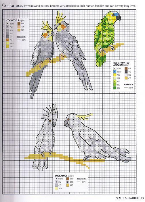 Вышивка попугайчики