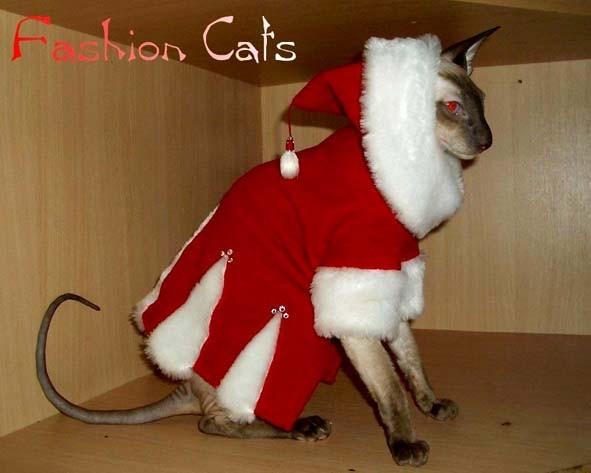 Как сшить новогодний костюм для кошки своими руками