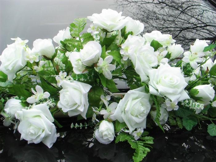 Красивые белые розы картинки