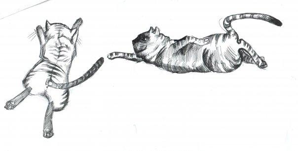 Как рисовать летящего кота