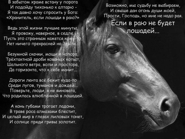 Поздравление коннику в стихах 49