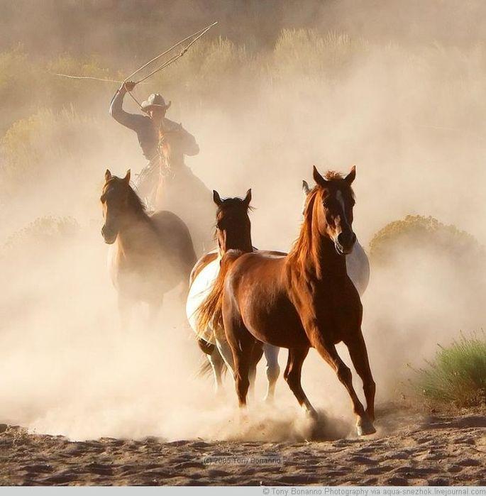 ковбой джо ловил мустангов учи ру