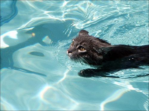 Плавающие кошки (1)  80 КБ