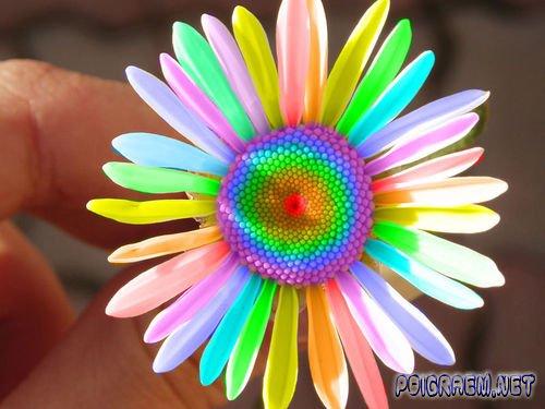 Редкие цветы фото и названия