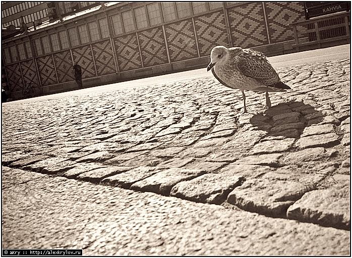 Чайки—убийцы