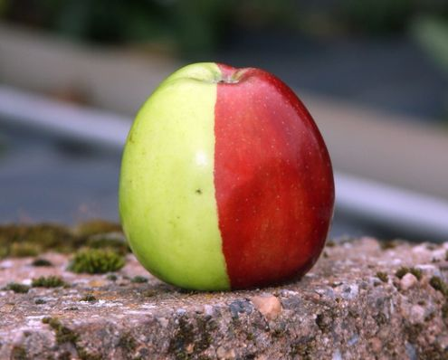 Мутация яблока
