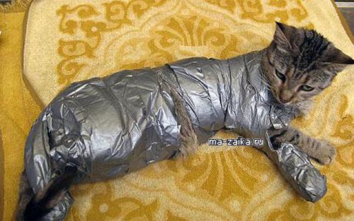 Кошка в клейкой ленте