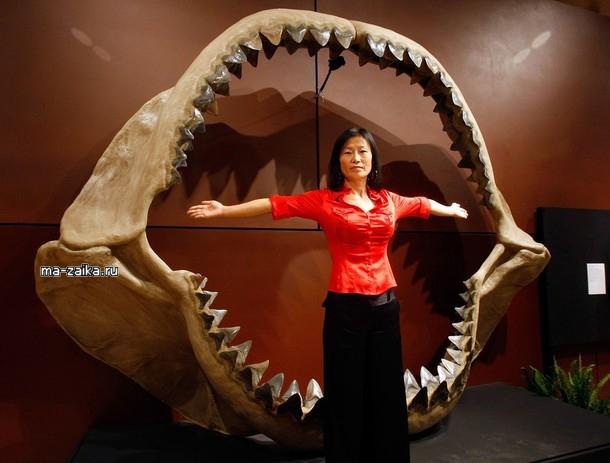 Ископаемая коллекция динозавров, мамонтов и акул