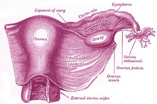 Аднексит (воспаление придатков)