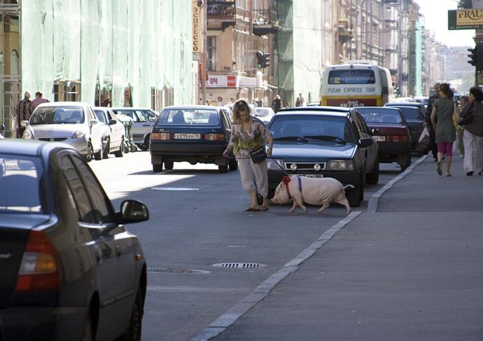 фото, питер, фото свиньи, http://bestgay.spb.ru