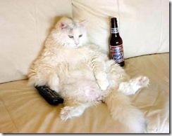 прикольное фото кота с пивом