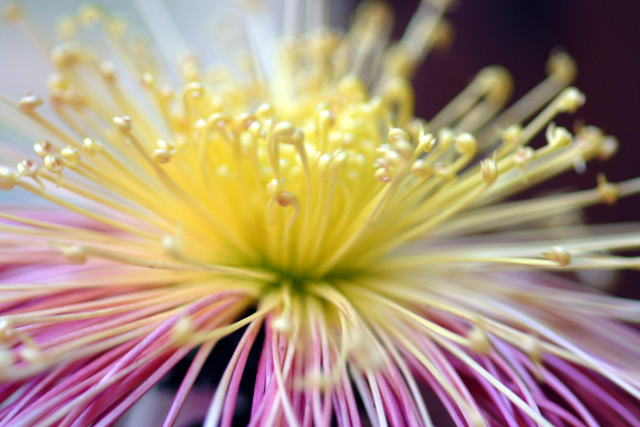http://img1.liveinternet.ru/images/attach/c/1//49/591/49591523_chrysanthemum2.jpg