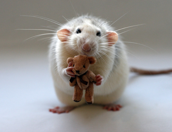 фото мышек смешные