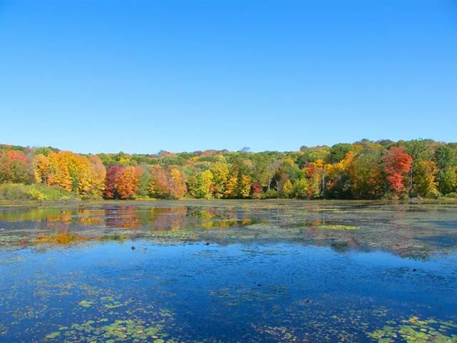 Осенняя пора,очей очарование