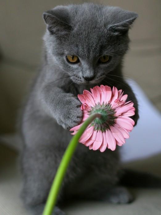 Цветы и кошка