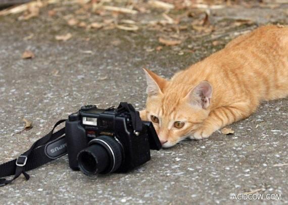 Кот с фотоаппаратом