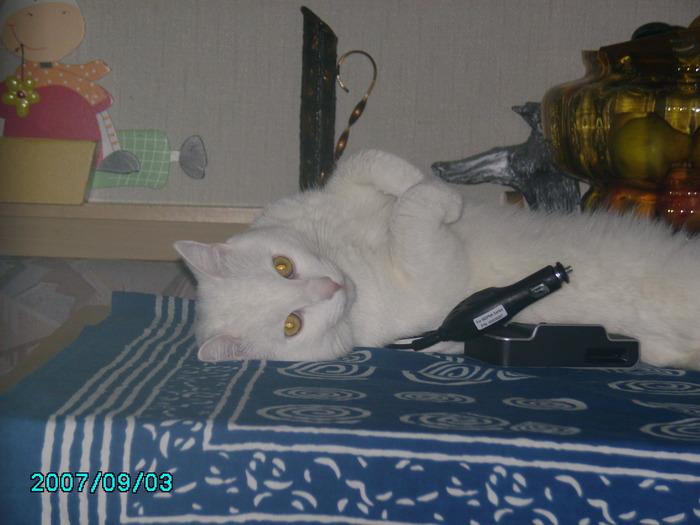 моя котомания и её обьект под именем Шнурок 67150