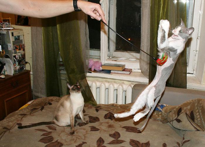 Ария кота