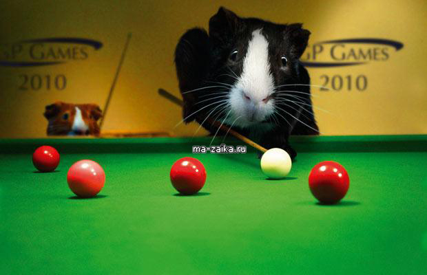 Календарь игр 2010 с морской свинкой.