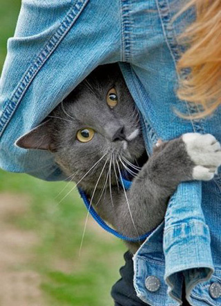 http://img1.liveinternet.ru/images/attach/c/1//51/134/51134787_cat1.jpg