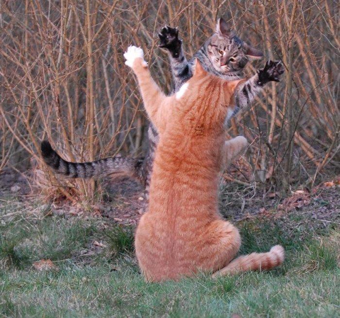 танцующие кошки и коты